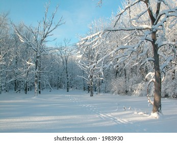Winter Landscape Ottawa - Cross Country ski trail