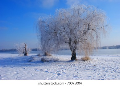 Winter landscape in the park