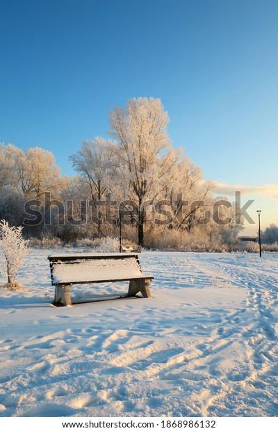 winter-landscape-park-trees-600w-1868986