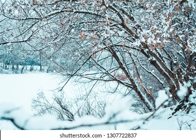 Winter landscape, park, trees and a lake in the snow.