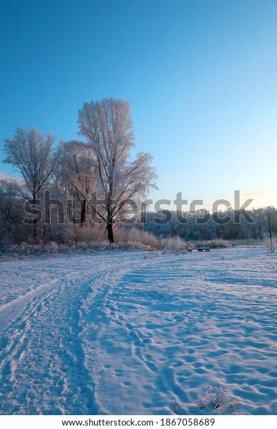 winter-landscape-park-wit-trees-600w-186
