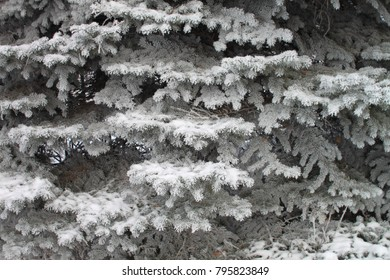 Winter landscape. Photo of a winter forest. Frost on the trees.