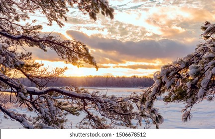 Winter landscape. Pine branches covered with snow and a view of the forest at sunset in the distance USA. Maine