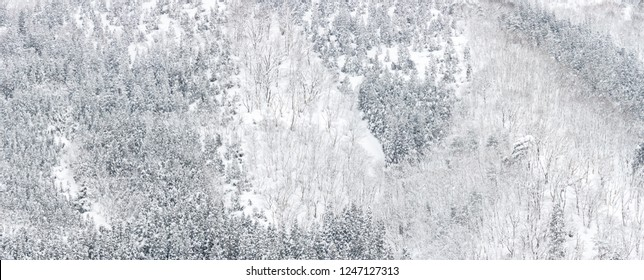 winter Landscape of Pine Forest at Shirakawago Chubu Japan Panoramic for web banner