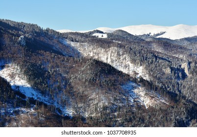 Winter landscape with pine trees forest  in Bucegi Mountains, Romania