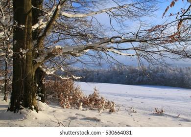 Winter landscape, Praha, Czech Republic