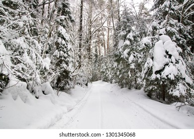 Winter landscape with road and big trees