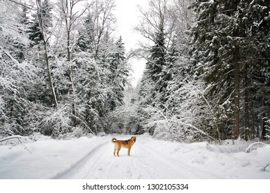 Winter landscape with road and big trees and dog
