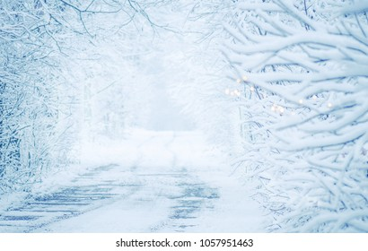 Winter landscape with road snow covered. Winter tunnel  in snowy park. Path in forest at winter time
