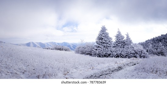 The winter landscape at Roan Mountain along the Appalachian Trail.