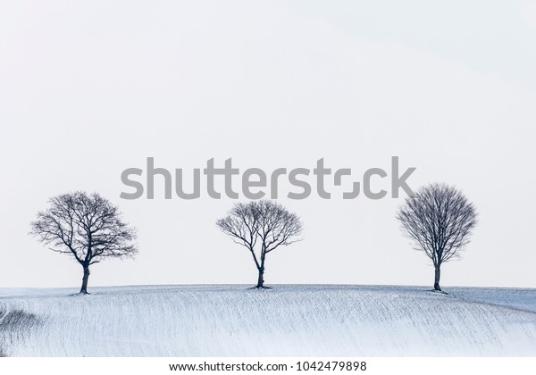 winter landscape with row of trees standing on a hill with snow