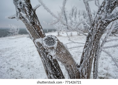 Winter landscape in Russia. Frozen trees and hoarfrost