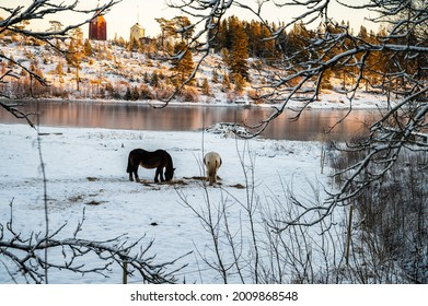 Winter landscape scene with forest, snow covered pine trees and seaside mountains. Winter horse ground tranquil view of frozen sea and silent sunnyday.