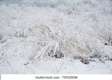 Winter landscape. Winter scene. Frozen meadow flower