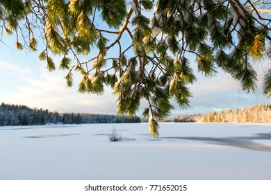 Winter landscape scenery behind the pine tree branches covered with snow. Finland winter wallpaper