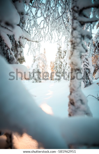Winter landscape with a lot of snow