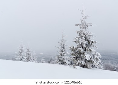 Winter landscape with snow covered fir trees as background with copy space.