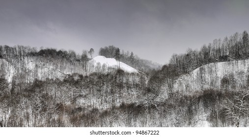 Winter landscape. Snow covered forest. Cloudy day.