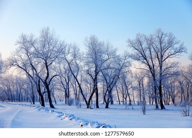 winter landscape snow covered trees in the park winter walking concept