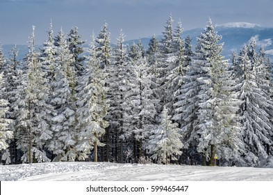 Winter landscape with snow covered trees at Skrzyczne mountain in Silesian Beskids, Poland