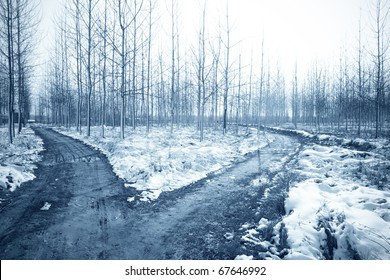 winter landscape with snow and forked road in the forest