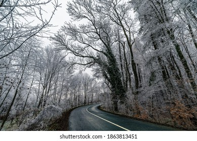 Winter landscape, snow and ice cover the landscape, forest road