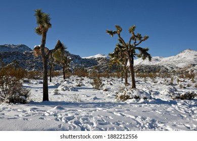 Winter landscape with snow in Joshua Tree National Park