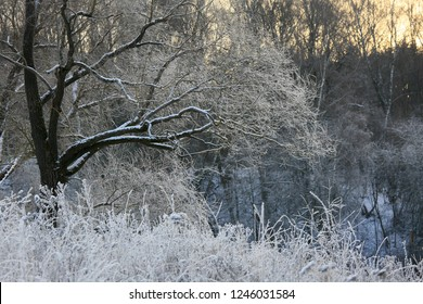 Winter landscape. Snow on trees in the forest and frost