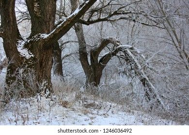 Winter landscape. Snow on the trees in the forest and frost on the grass