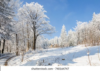 winter landscape with snow on trees