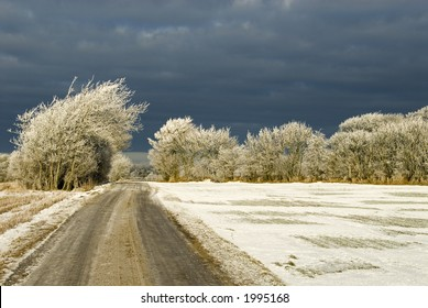Winter landscape. Snow storm coming up behind the white rime covered trees. Western Jutland, Denmark.