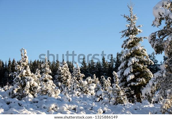 Winter landscape snow sweden