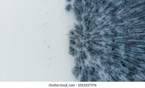 Winter landscape, snow and trees in the forest, top view, photo with drone
