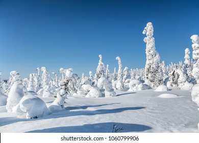 Winter landscape. The snow-clad trees on Mount Nuorunen. The Republic of Karelia. Russia