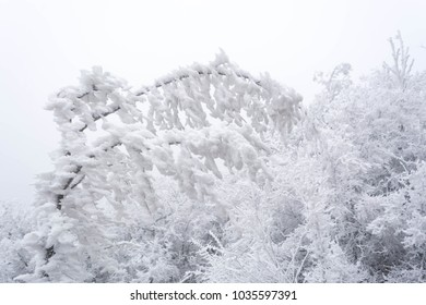 Winter landscape in the snow-covered forest