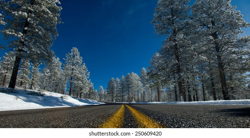 winter landscape snow-covered road in the pine forest frosty day