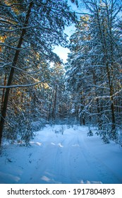 Winter landscape with snow-covered spruce forest. sunny day, the trees are covered with snow Christmas view. on a sunny day