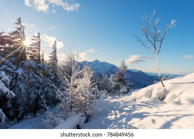 Winter landscape with snow-covered trees, mountains and and sunstar photographed at mount Jochberg at sunset, Bavaria, Germany
