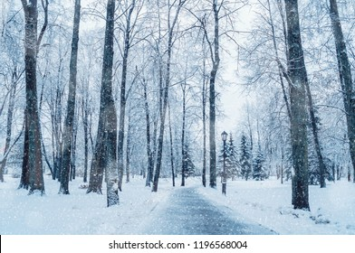 winter landscape frosty trees snowy forest stock photo edit now
