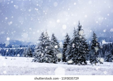 Winter landscape with snowy trees and snowflakes. Christmas concept