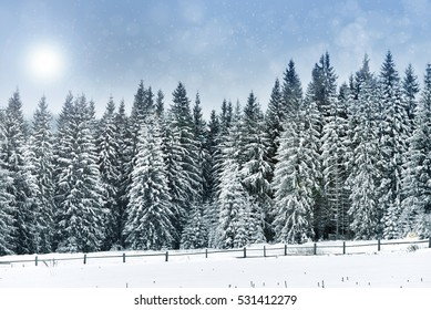 Winter landscape with snowy trees and snowflakes. Christmas greeting concept