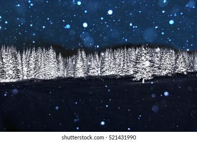 Winter landscape. Spruce forest in winter.
