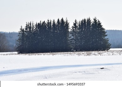 Winter landscape with spruce trees on the snowy field