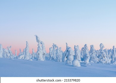 Winter landscape at sunrise in Finnish Lapland, Riisitunturi National Park. Spruce trees covered by snow.