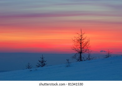 Winter landscape with a sunset and fir-trees