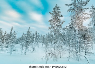 Winter landscape at sunset, frozen trees in winter in  Lapland, Finland
