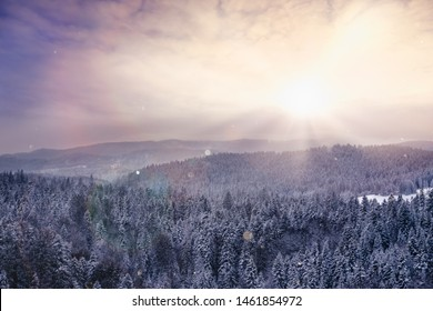 Winter landscape in sunset. Winter in pine forest in sunset.