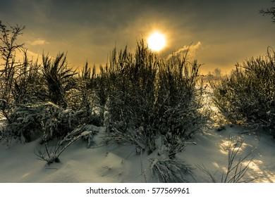 Winter landscape with sunset sky, moody scene