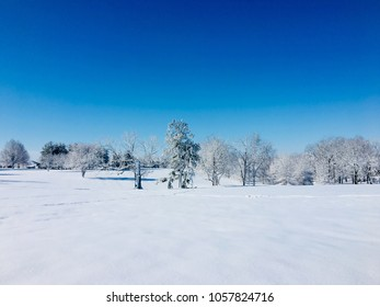 Winter landscape, trees after snowfall.