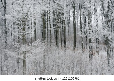 Winter Landscape with Trees Covered with Frost and Snow iin Kaszuby region, Poland